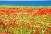In de lente naar Kreta? Doen!